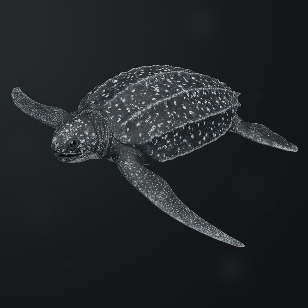 Eugenio stanislav leatherback sea turtle 00