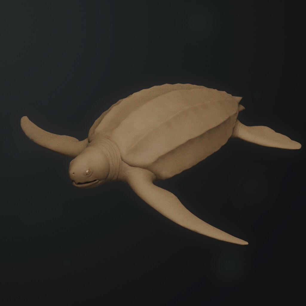 Eugenio stanislav leatherback sea turtle 03