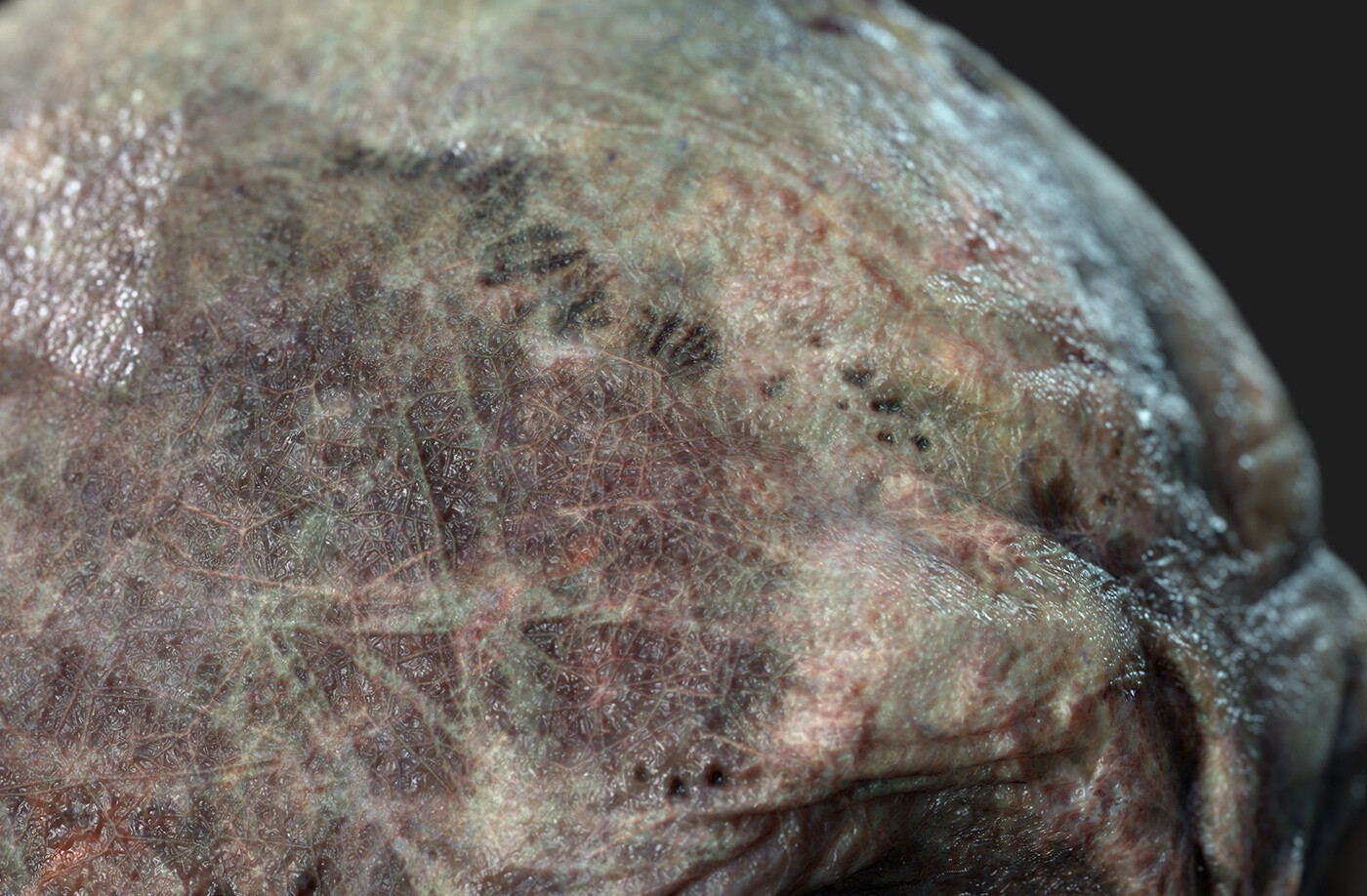 Zombie Skin micro detail closeup 4