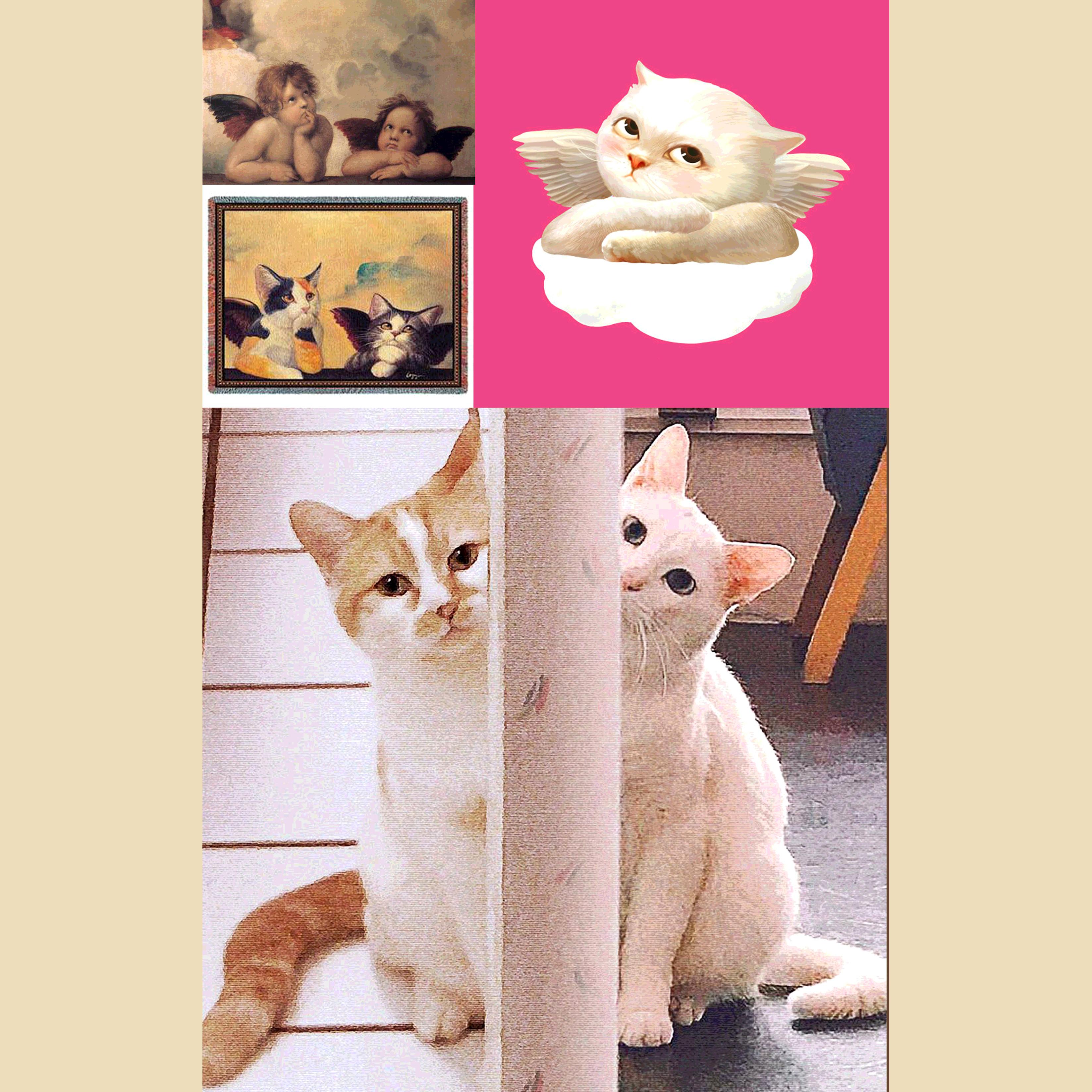 Cherub Cats 520 - REF