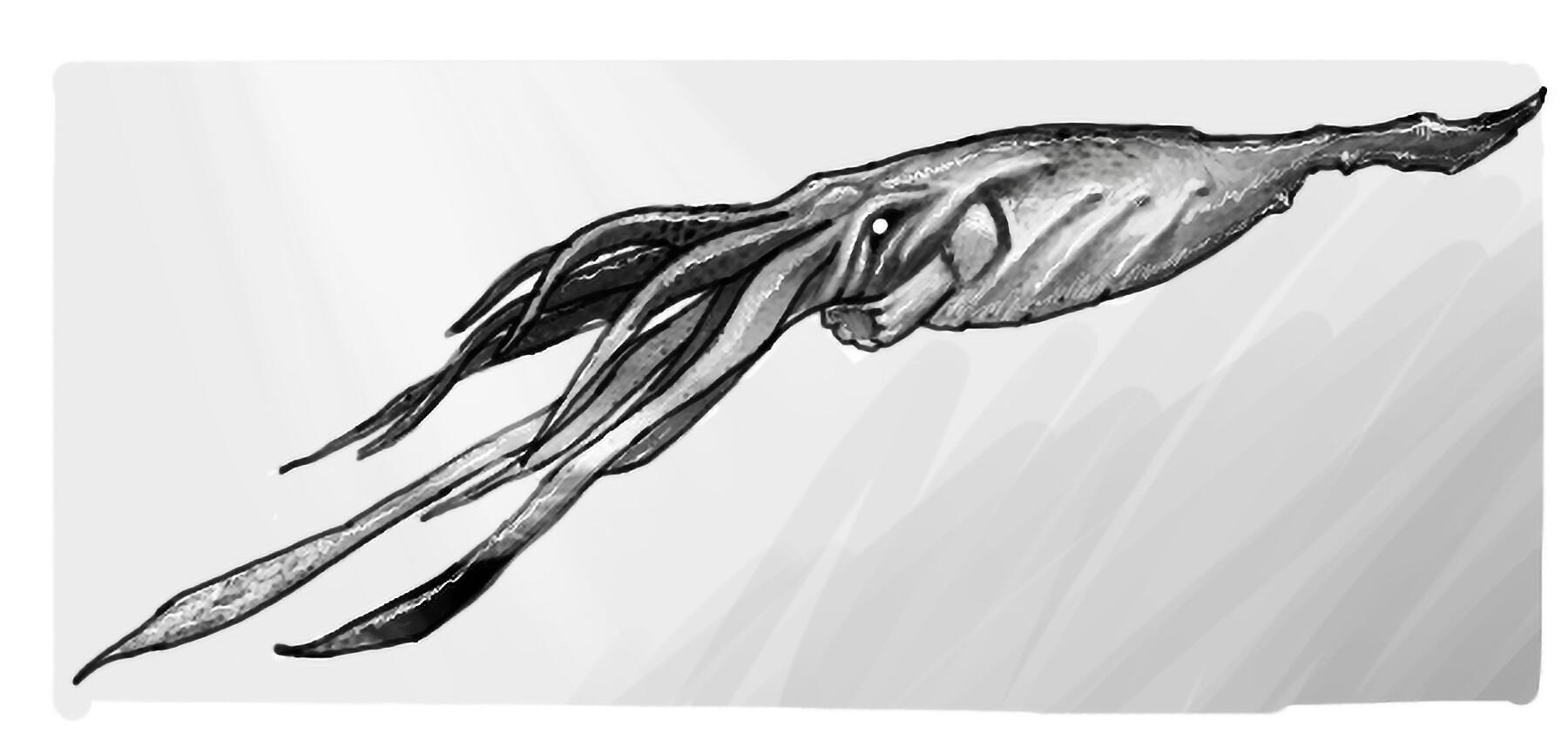 Fatih gurdal squid2