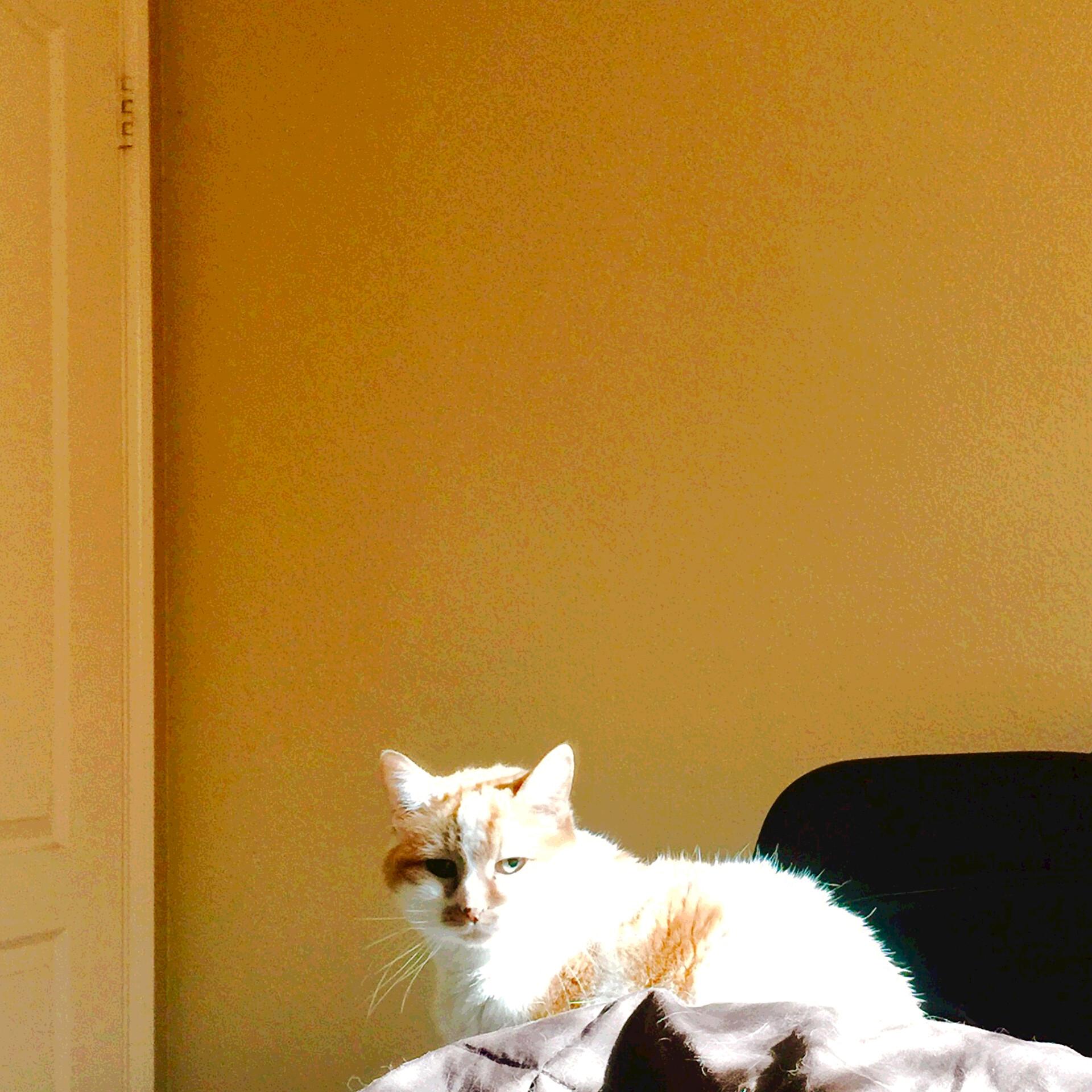Eric lynx lin vi orangeroom