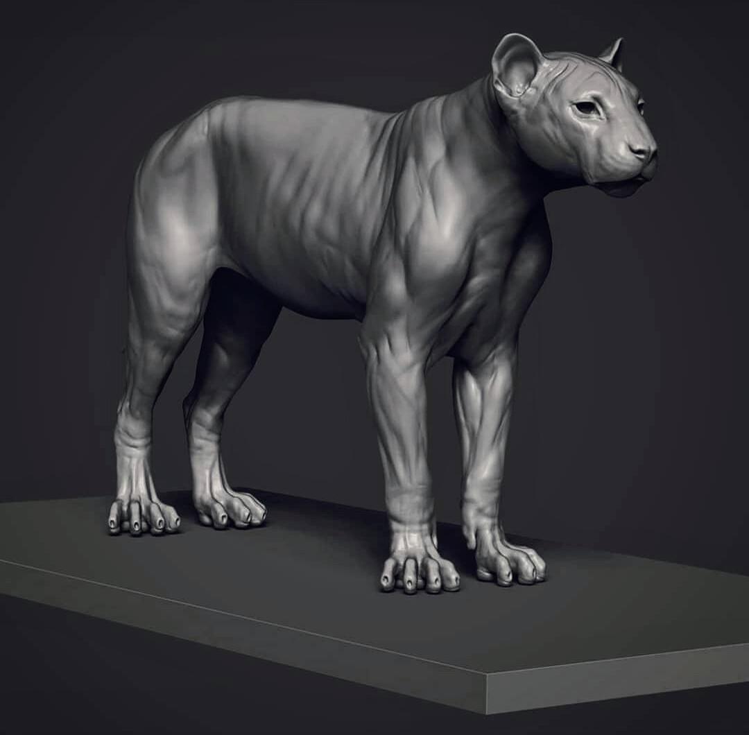 or a Lion Pardinus...
