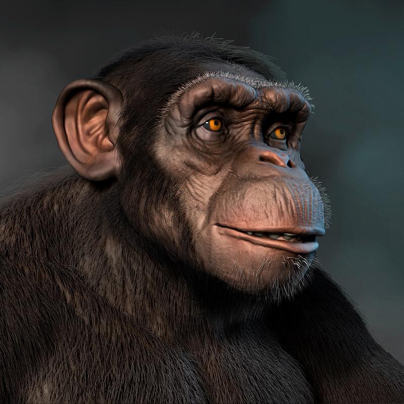 Chimp WIP