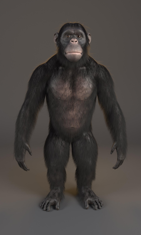 Alex silva chimpanze render 03 physcamera001