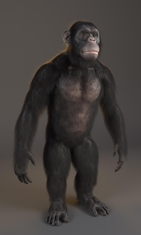 Alex silva chimpanze render 03 physcamera002