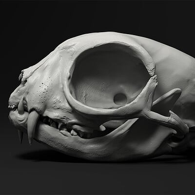 Elias glasch cat skull 01
