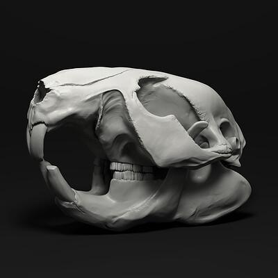 Elias glasch beaver skull 01