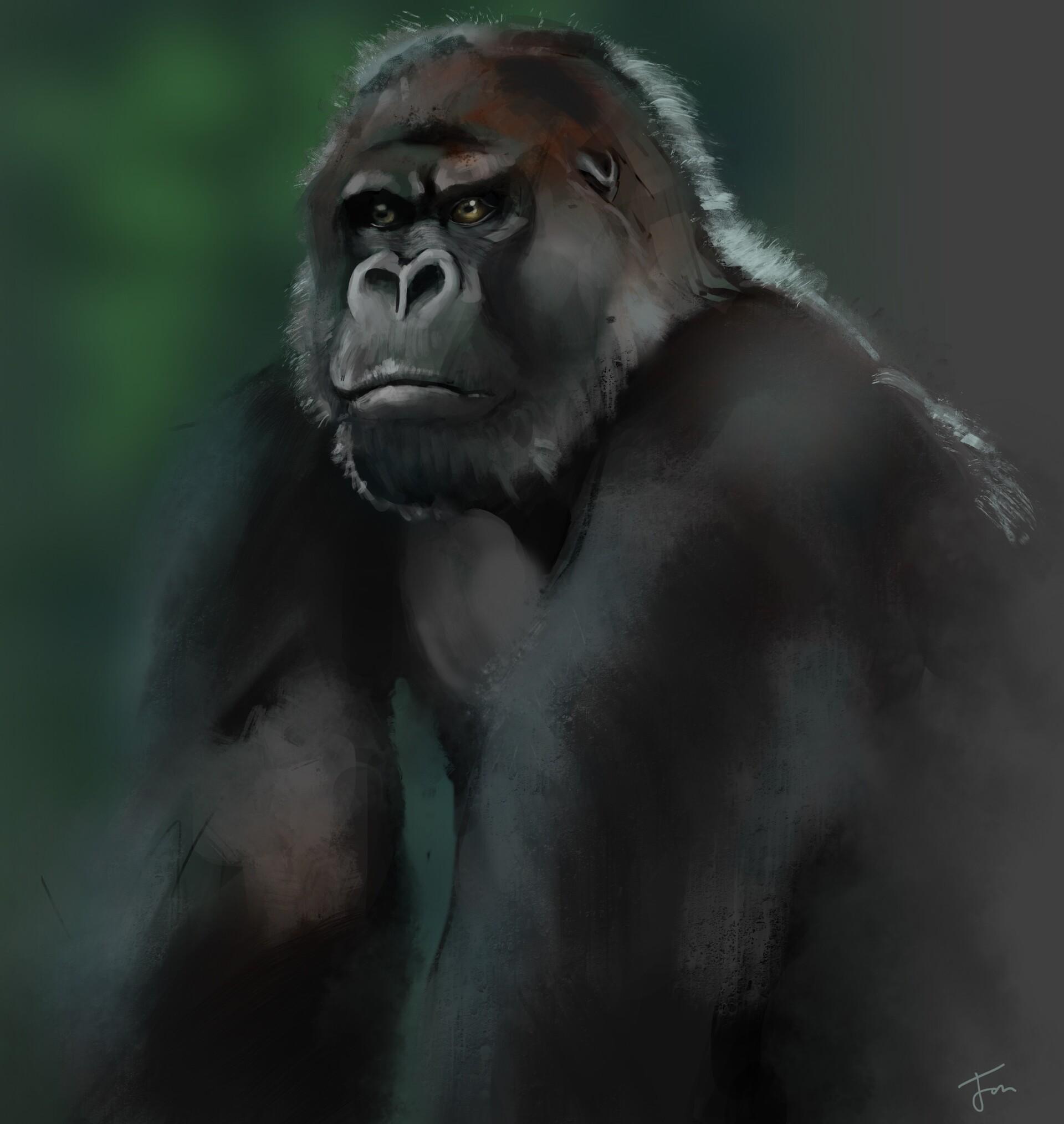 Gorilla Study.