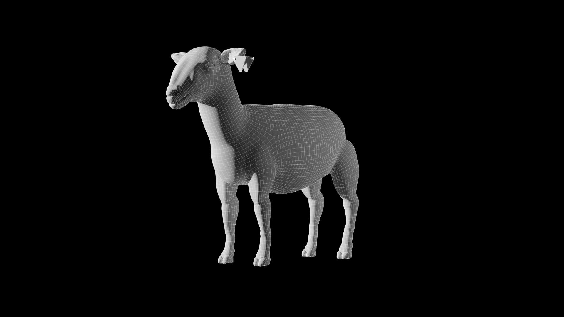 Michelangelo girardi sheepwf
