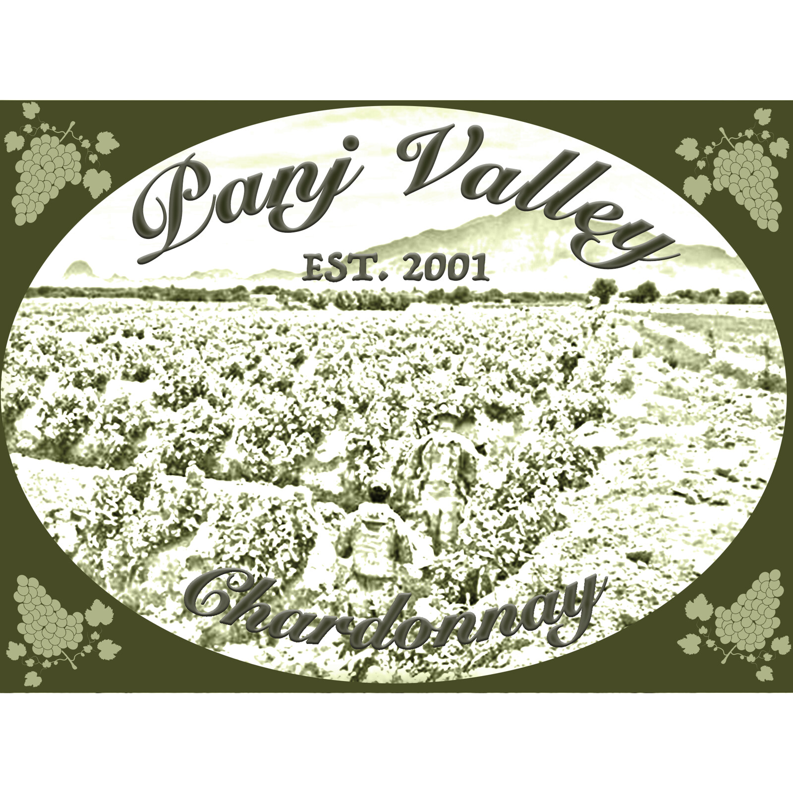 Wine label based off Afghan grape rows.