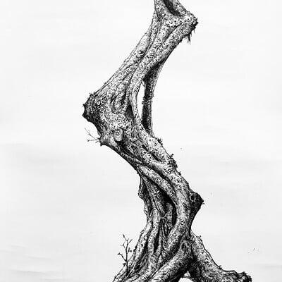 A shipwright tree
