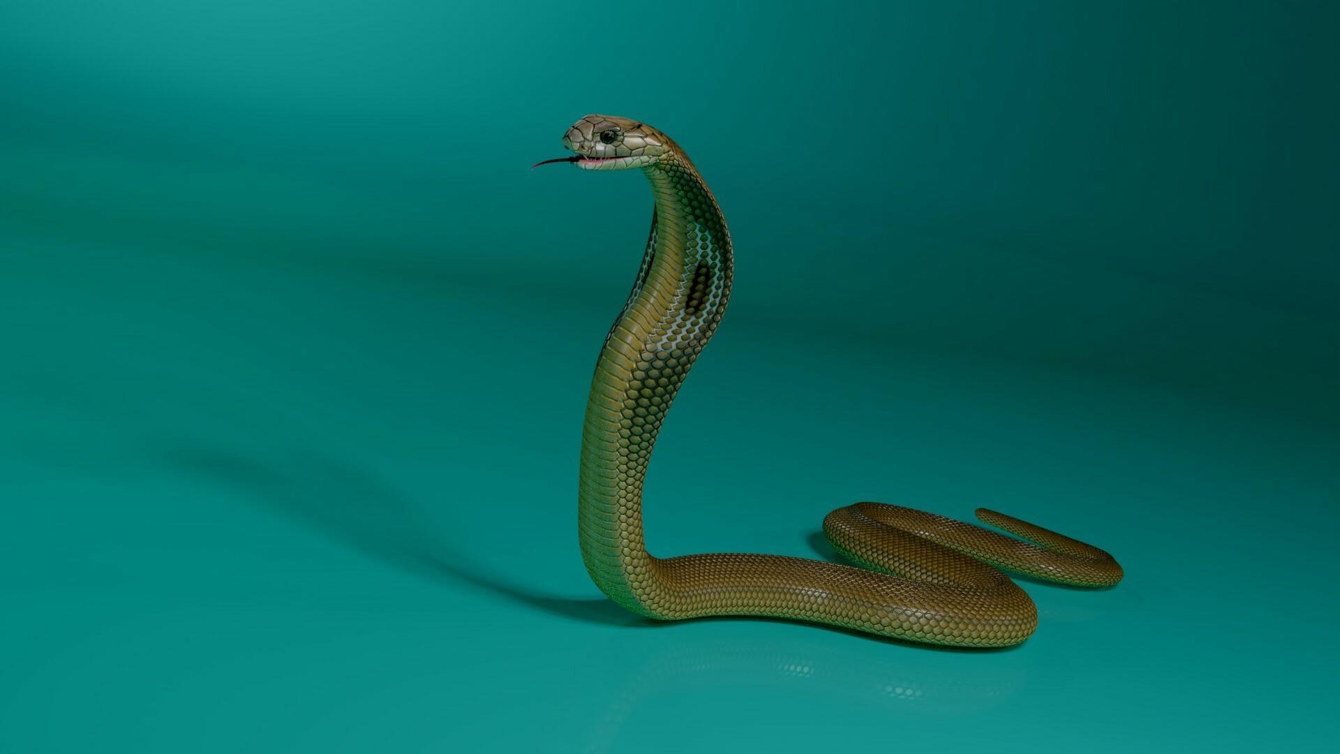 stephan plotnicov 3d model cobra snake 05
