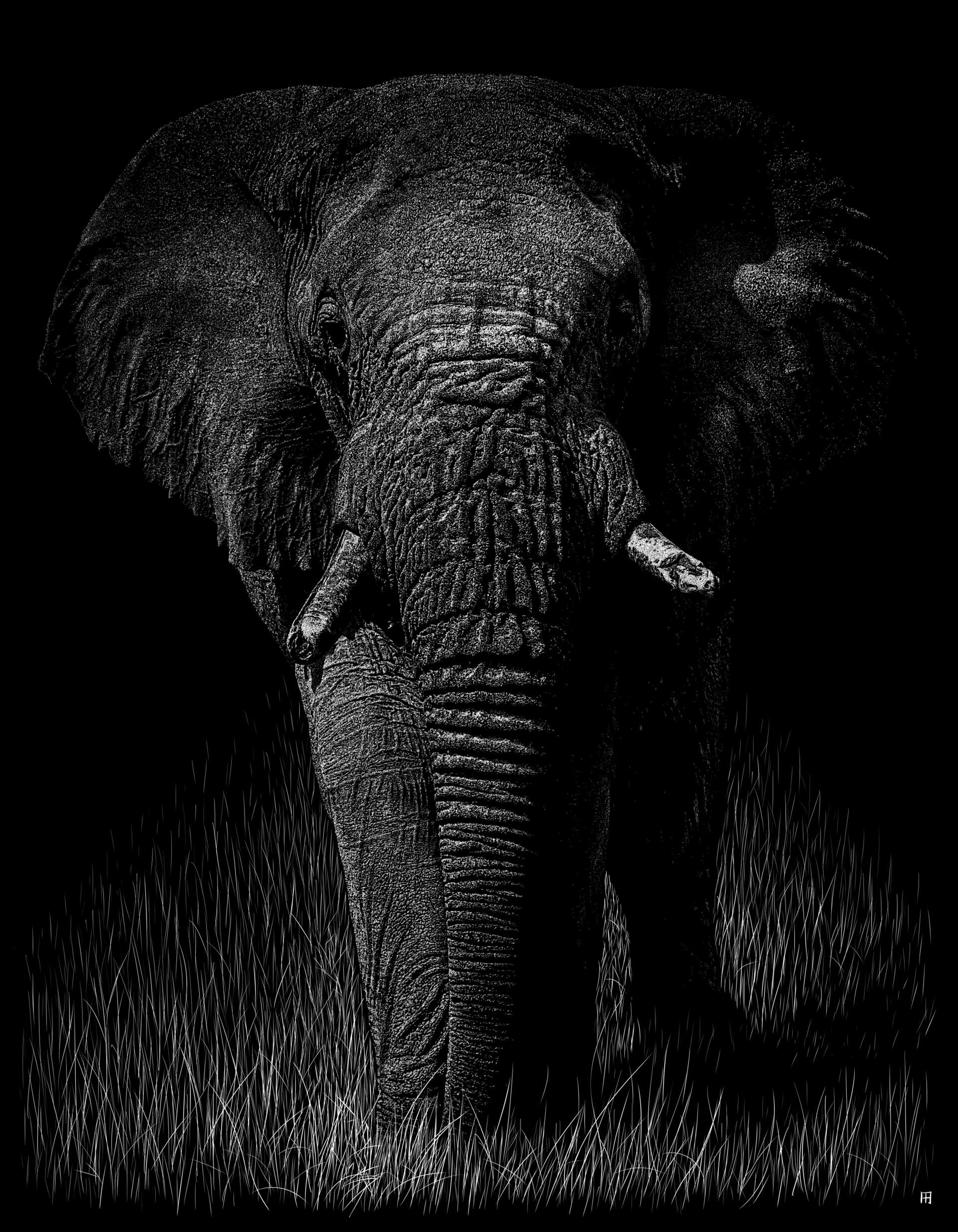 elephantidae II Digital scratchboard, july 2019