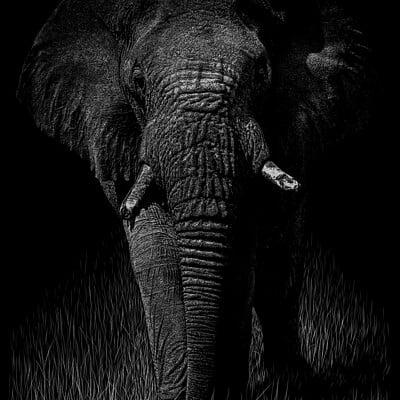 Patrik roy elephantidae ii v1 1 2400x3086