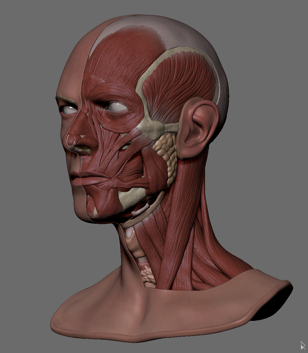 Rodrigo avila zbrush document