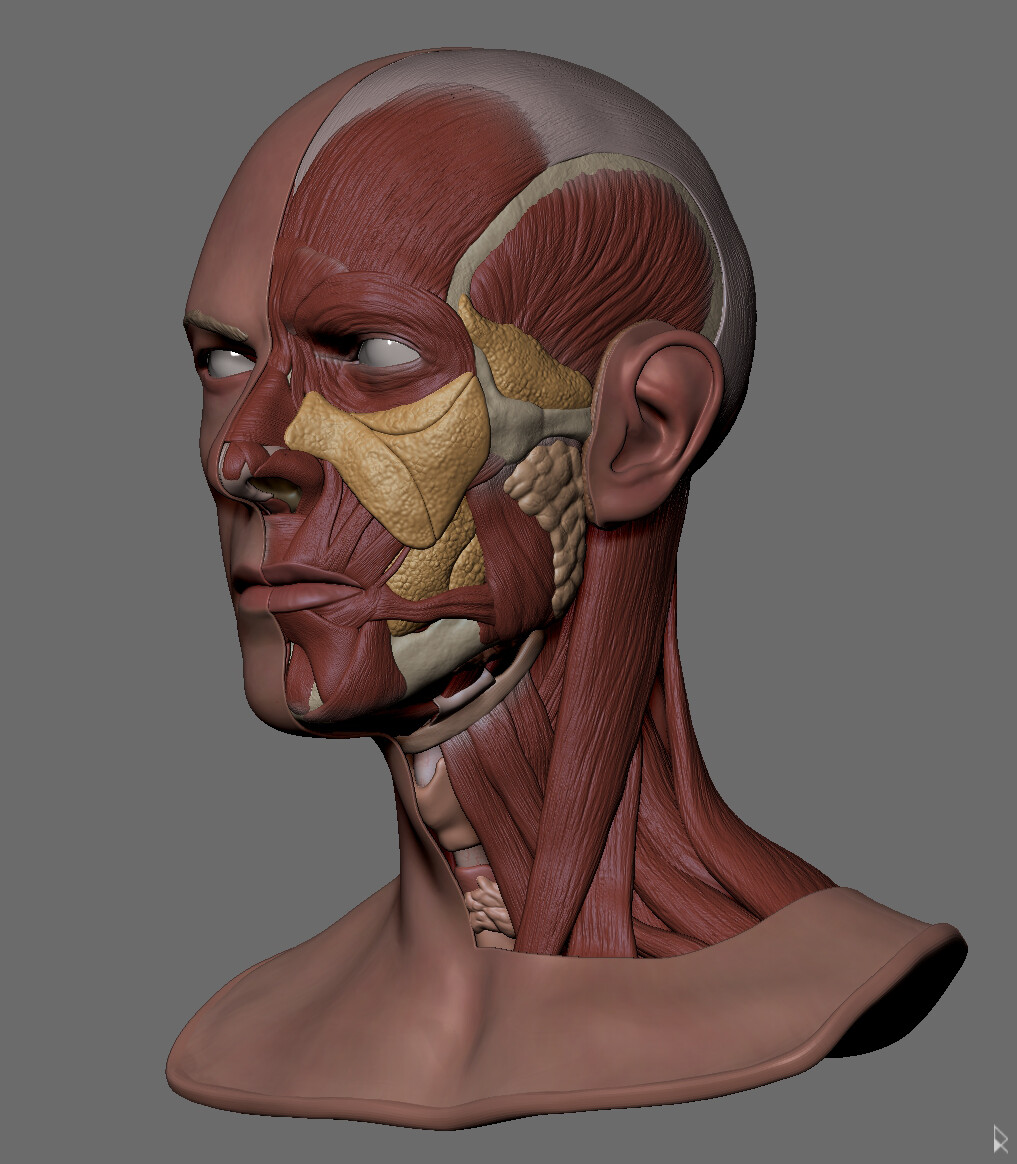 Rodrigo avila zbrush document2