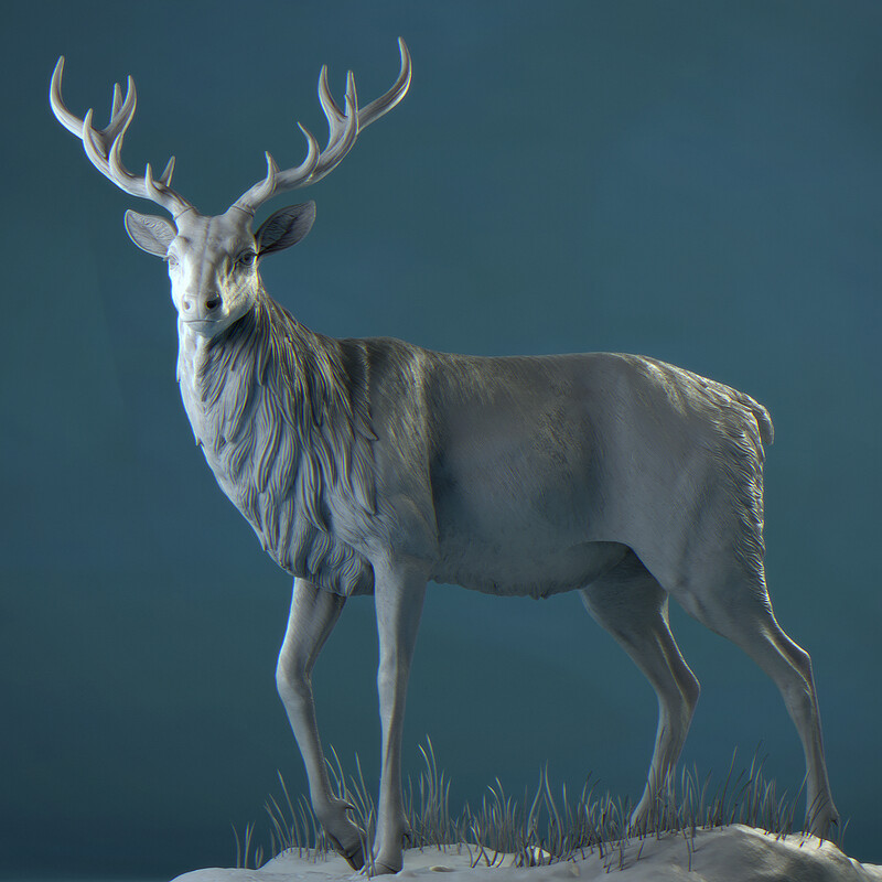 Red Deer - Anatomy Study