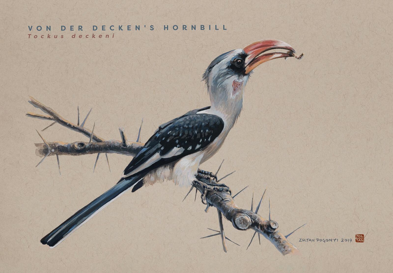 Von der Decken's hornbill (Tockus deckeni)