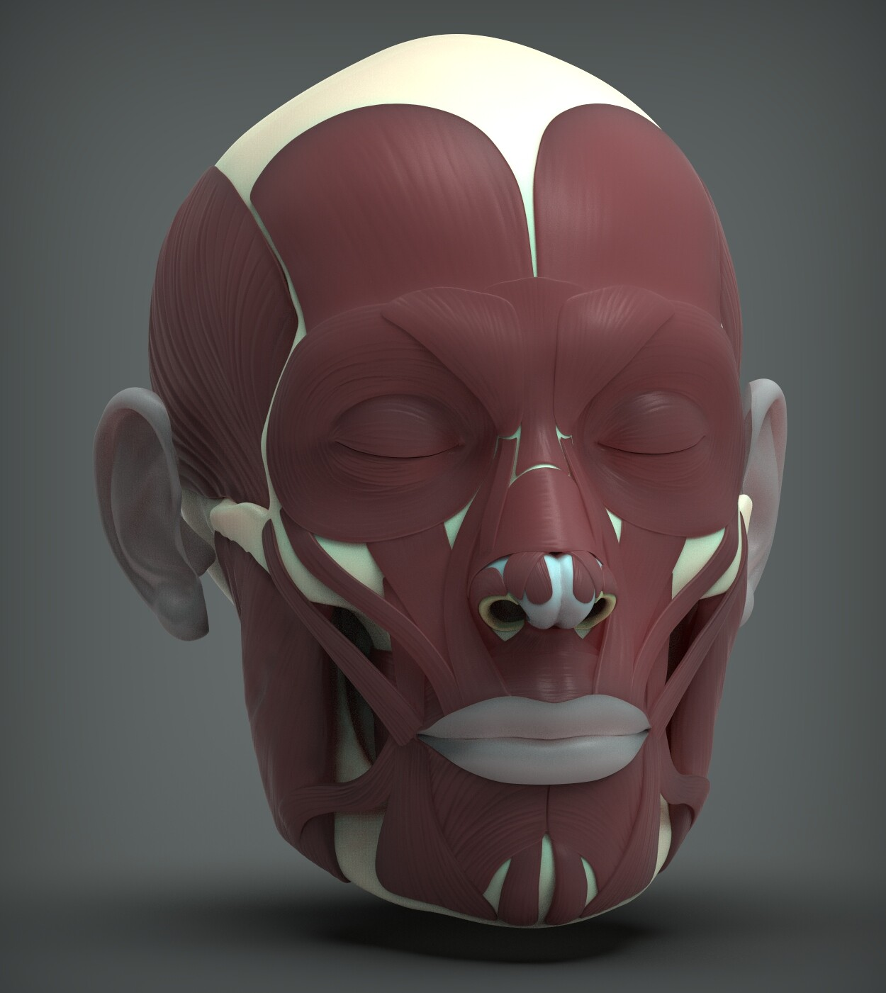 John deriggi face human anatomy 01a