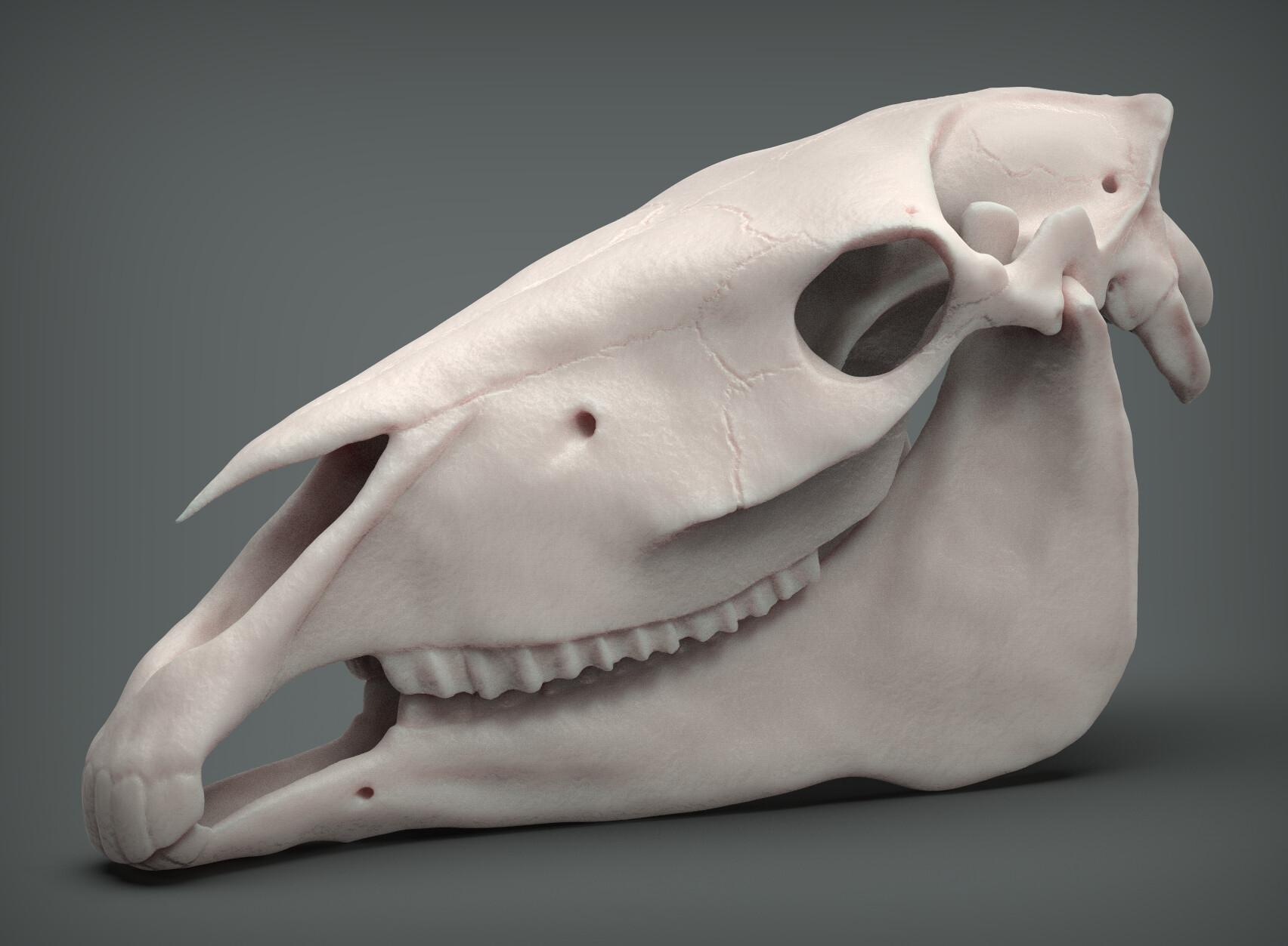 John deriggi horse skull01