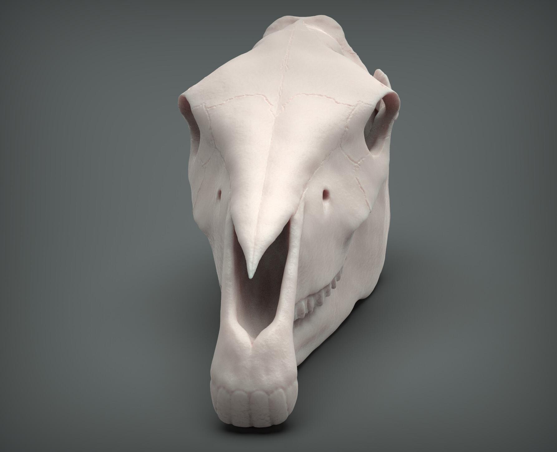 John deriggi horse skull03