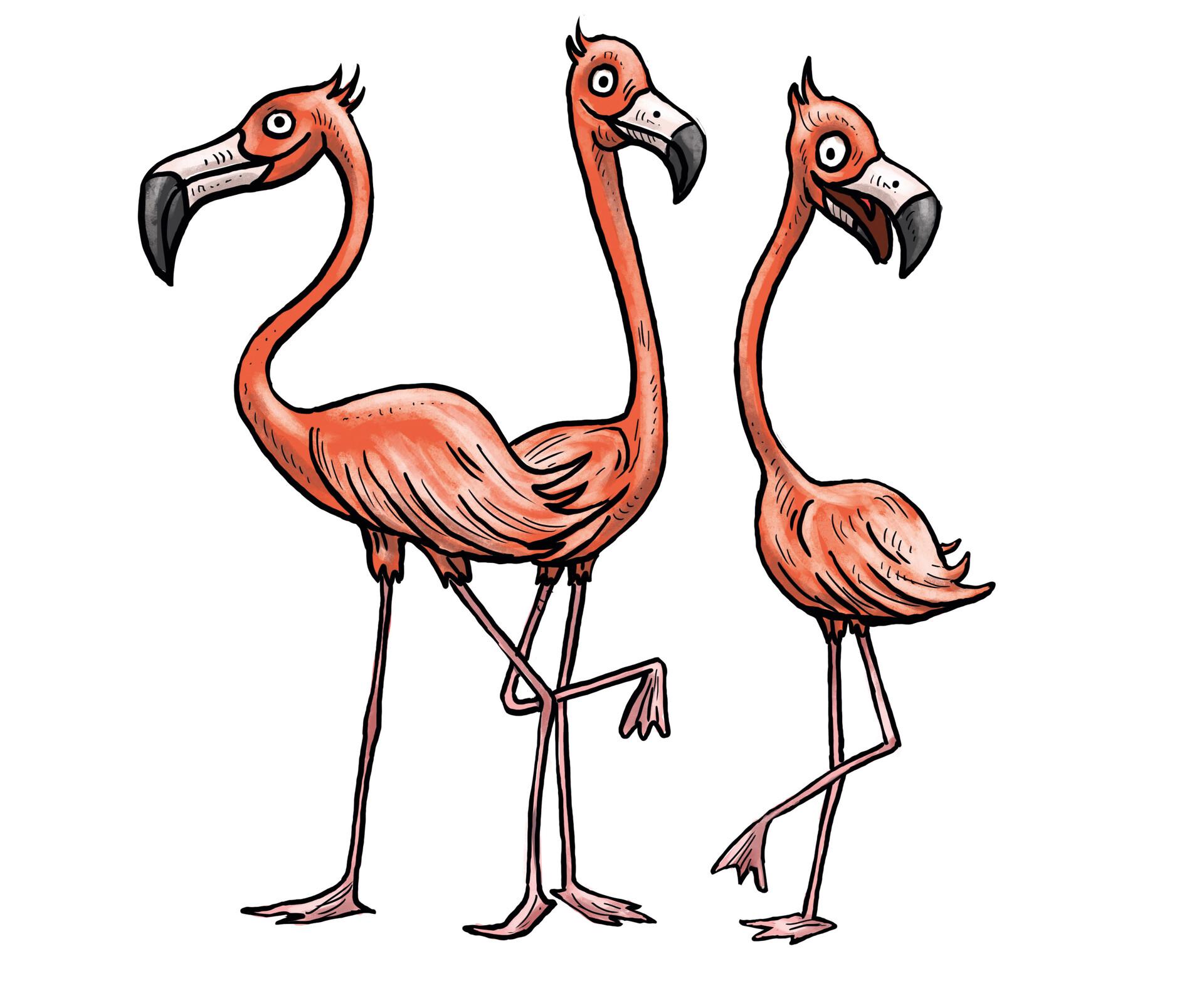 Nicolas rivero flamingo f 2
