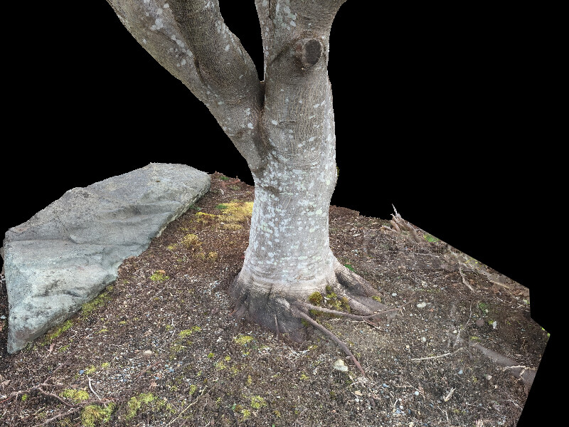 Photogrammetry solve of the tree trunk and soil.