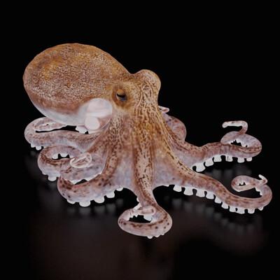 Mieke roth octopus 1