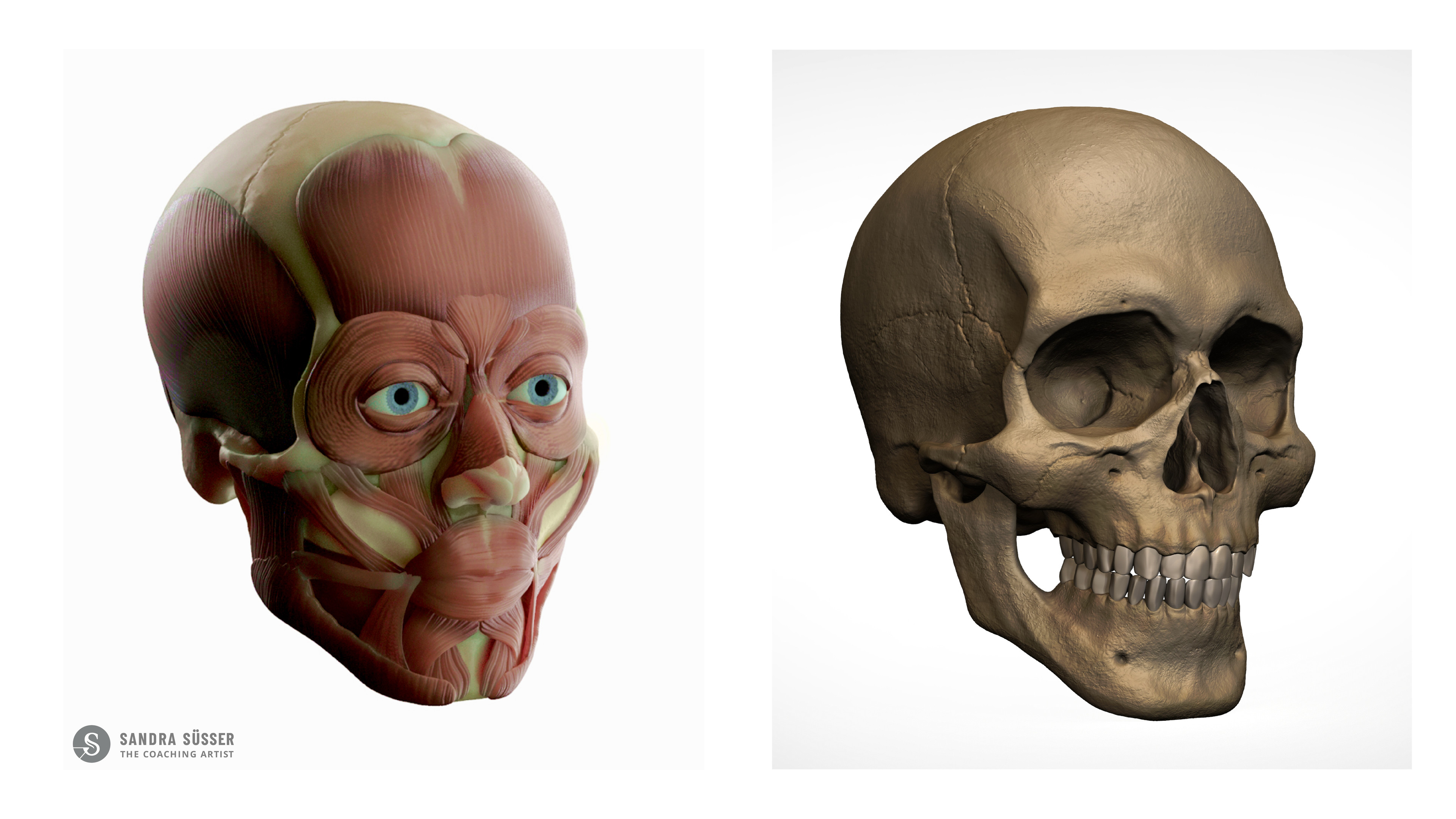 Muscle & Skull Layer Rendering