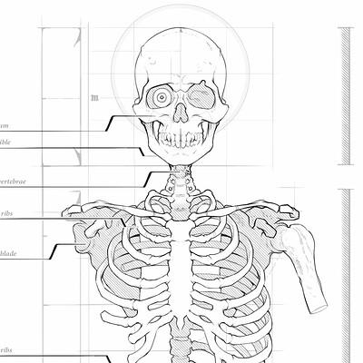 Gregor kari gregor kari bones of the torso