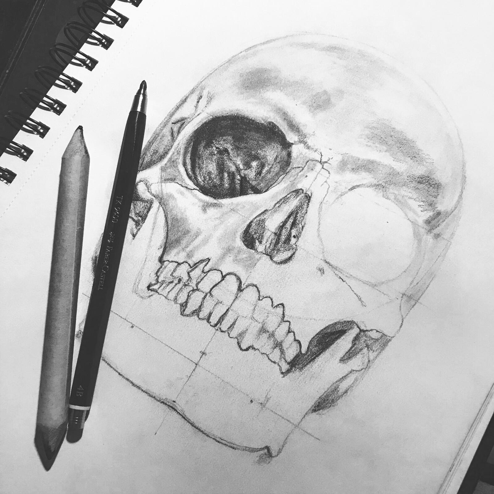 Skull in progress