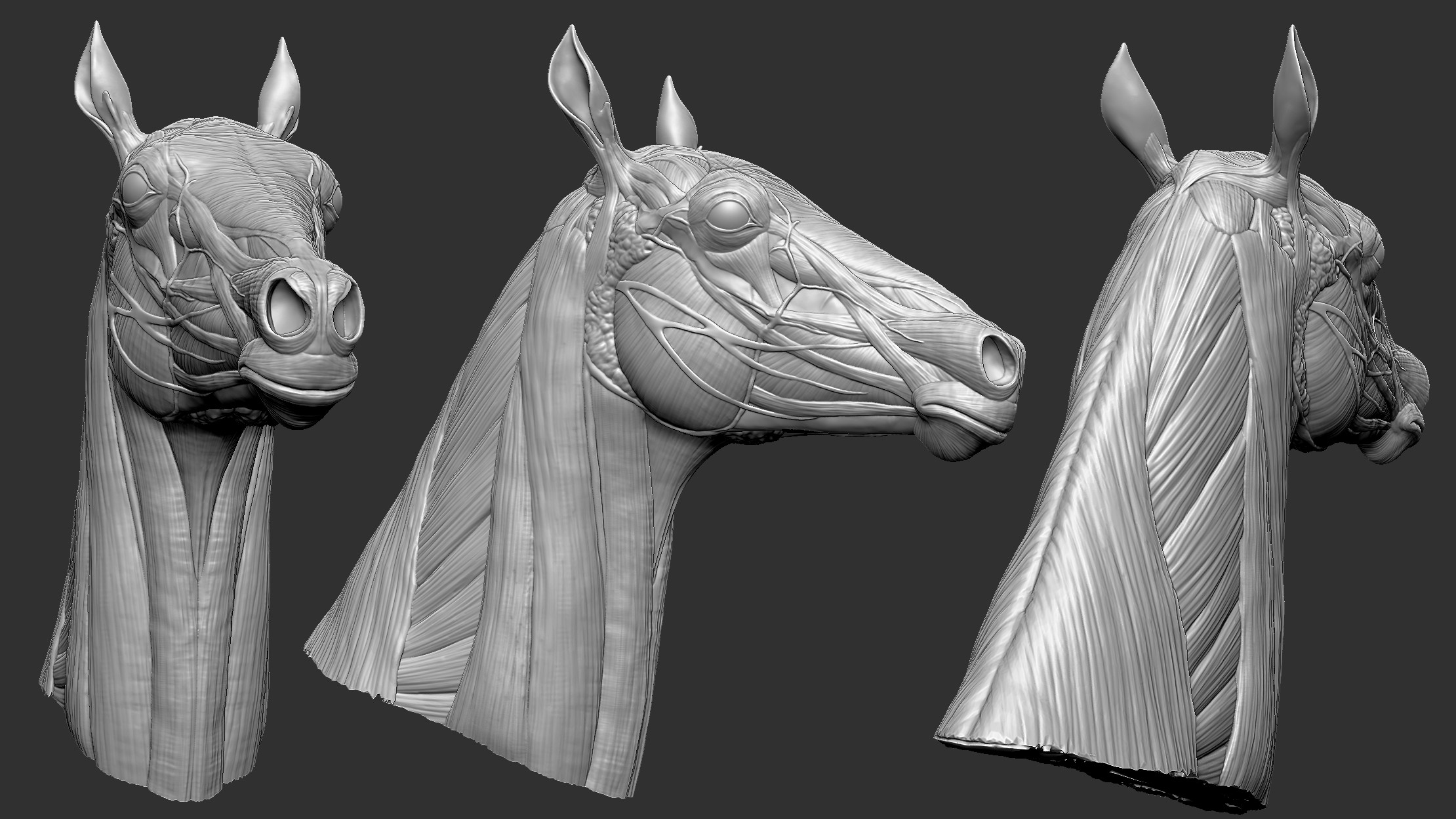 Jim Becerra Horse Head Anatomy