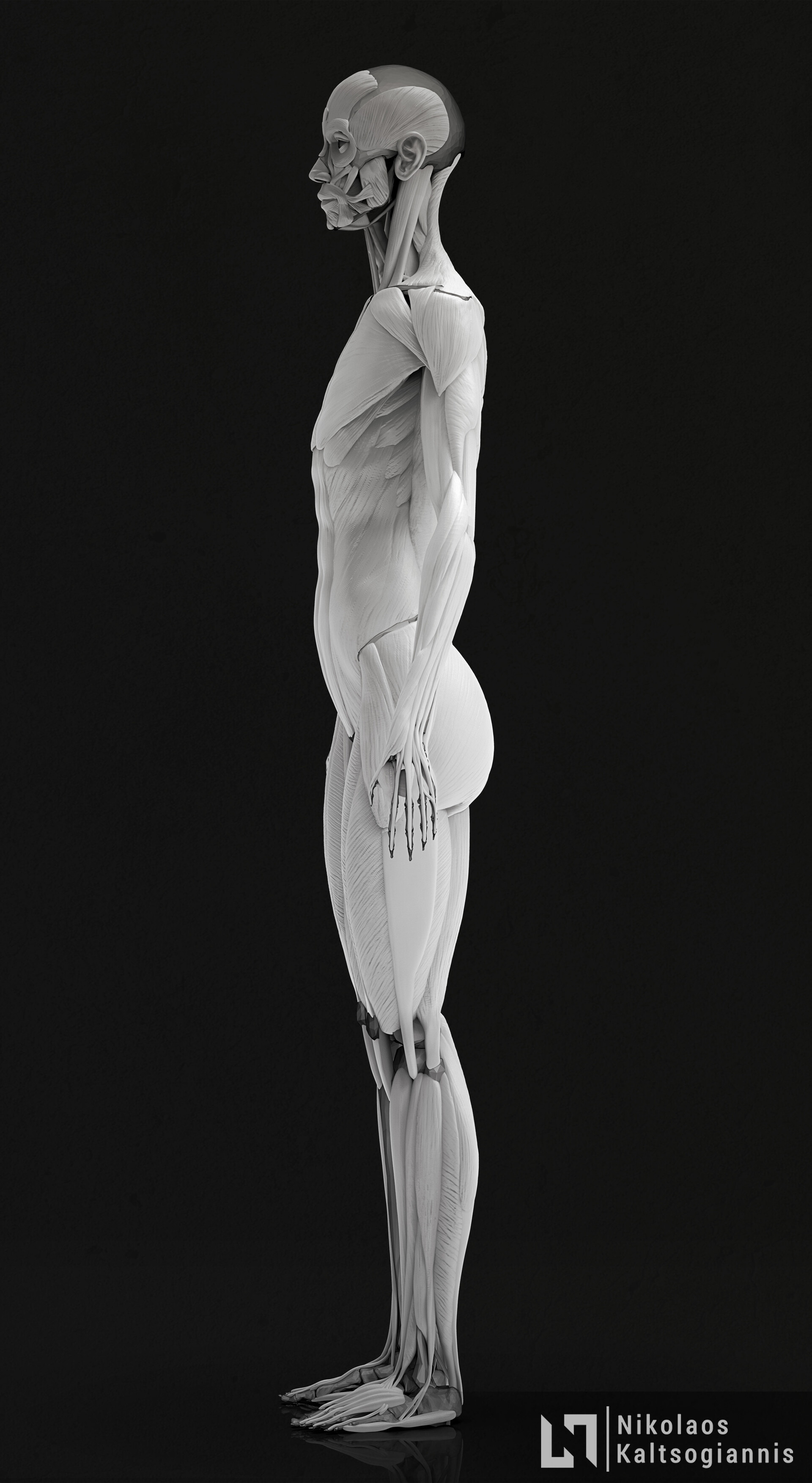 Nikolaos kaltsogiannis female anatomy echorche 03