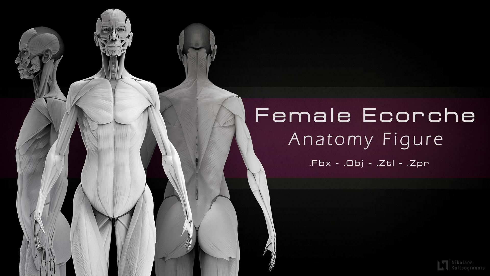Nikolaos kaltsogiannis female anatomy echorche shop thumbnail 01