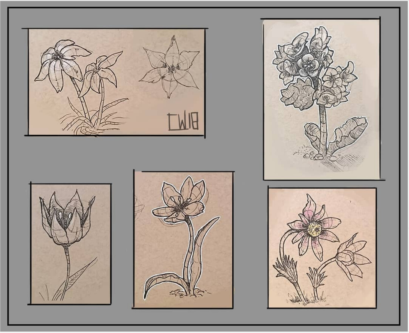 Flower studies in ink