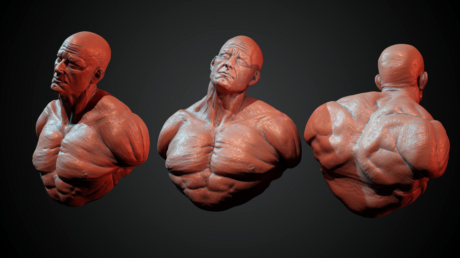 Male Torso sculpting - Timelapse video