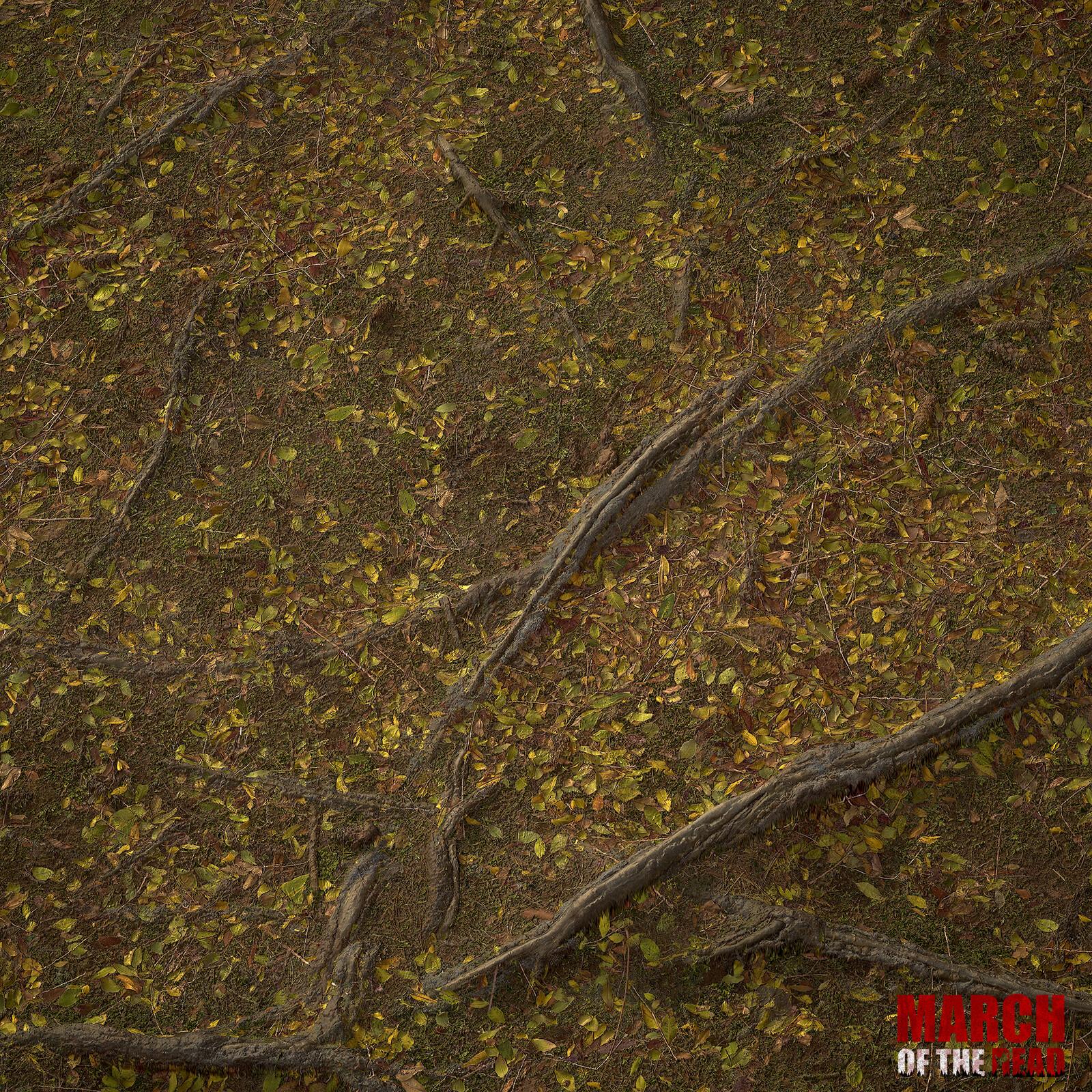 Grassland Forest Roots