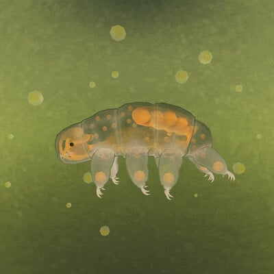Saṃsāra of a Water Bear