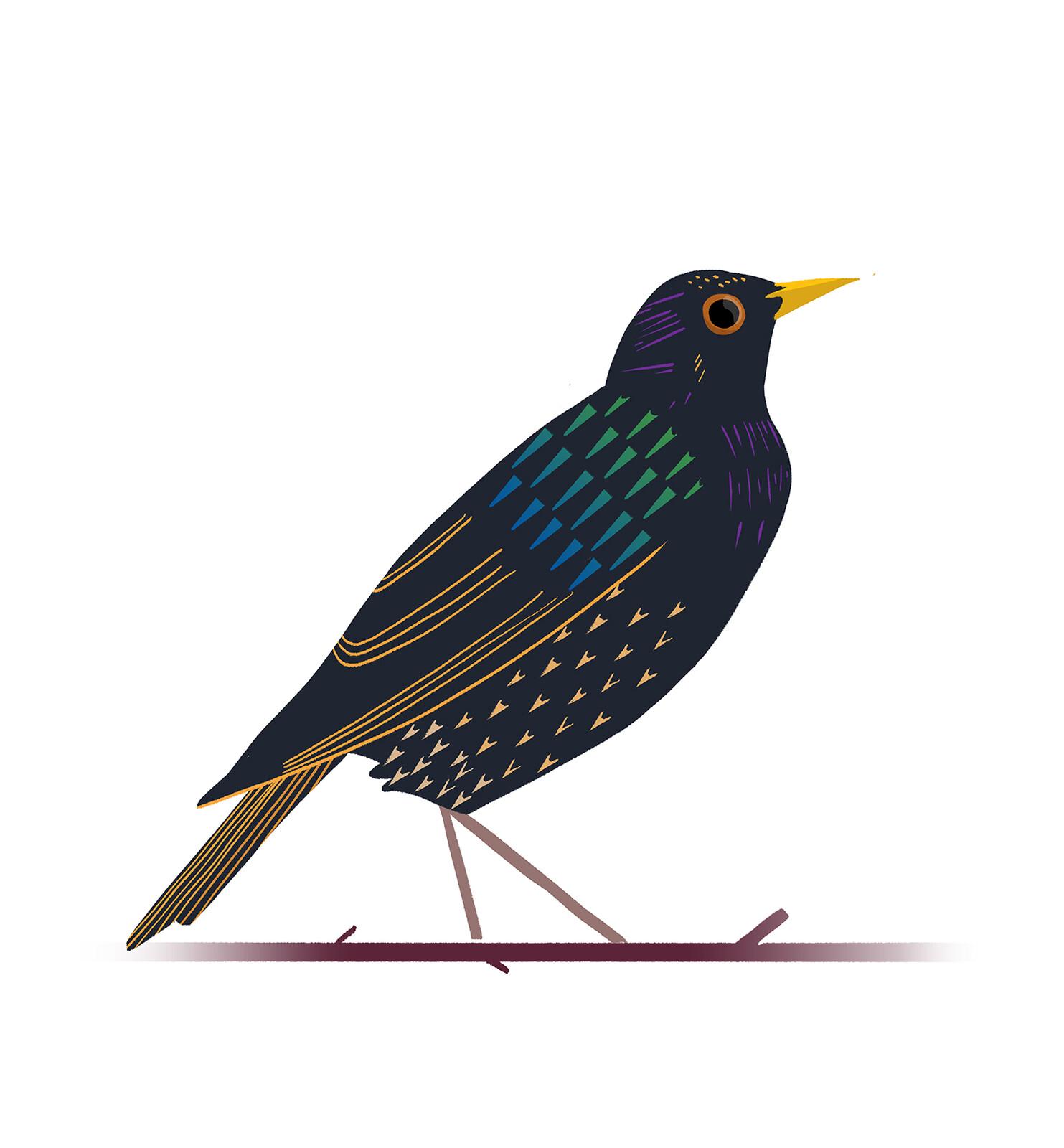 Album: Natural history illustration