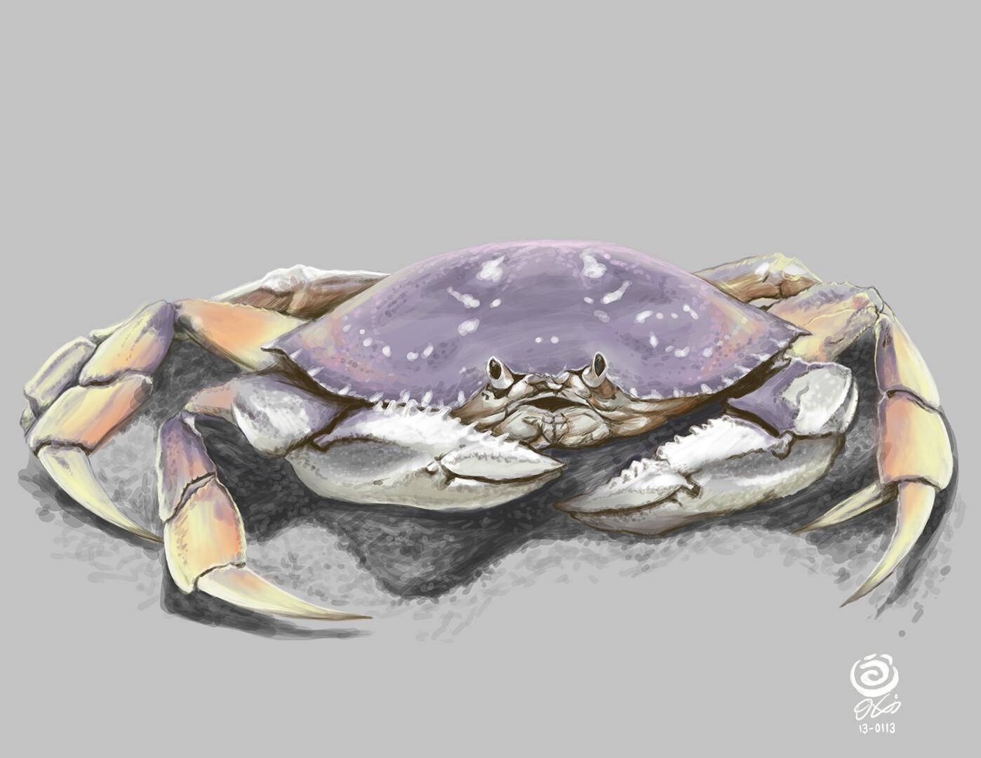Crab Digital Painting