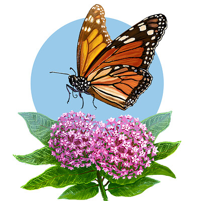 Ken calvert monarch 4