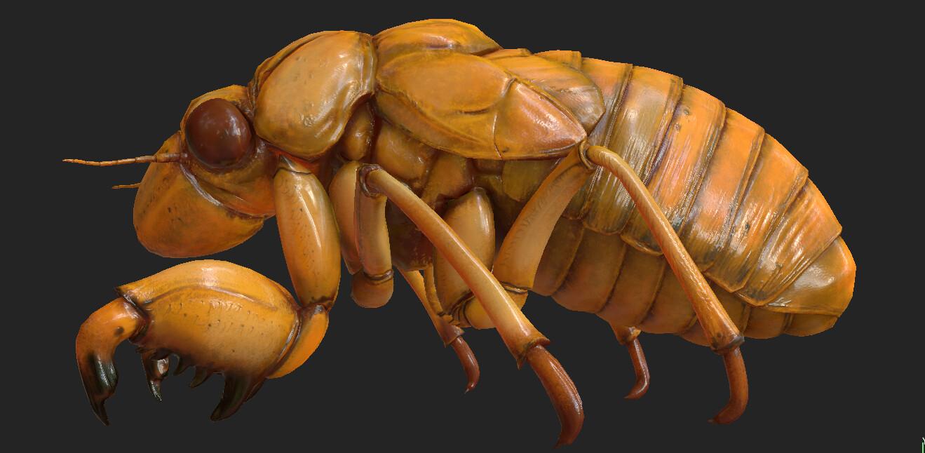 Eric keller cicada nymph textured 01