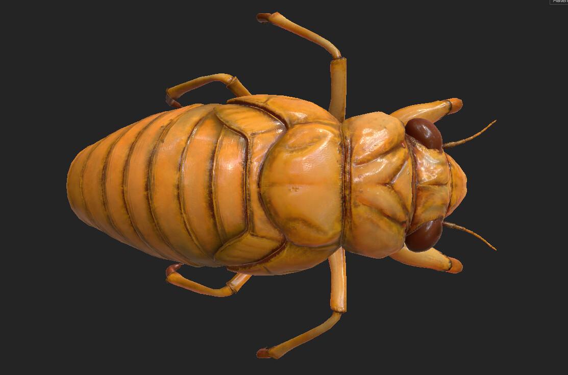 Eric keller cicada nymph textured 03