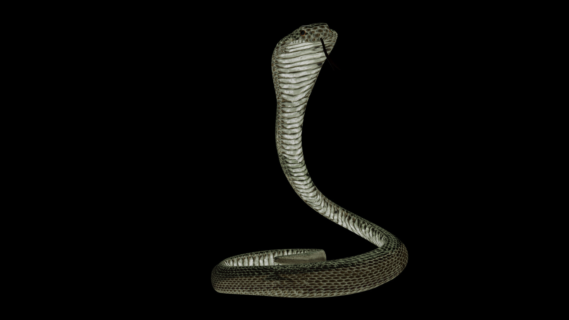 Cobra up front