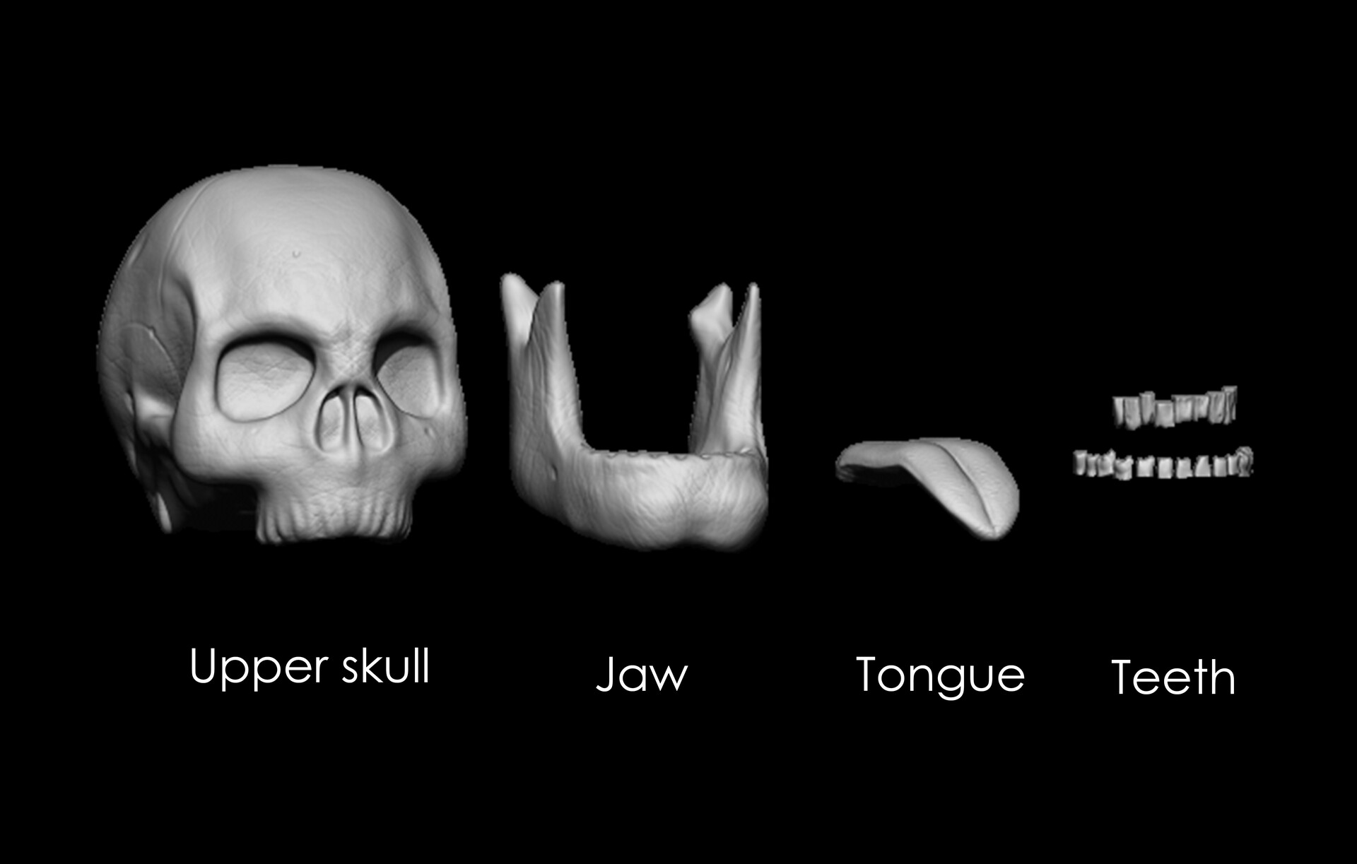 All components of the skull asset