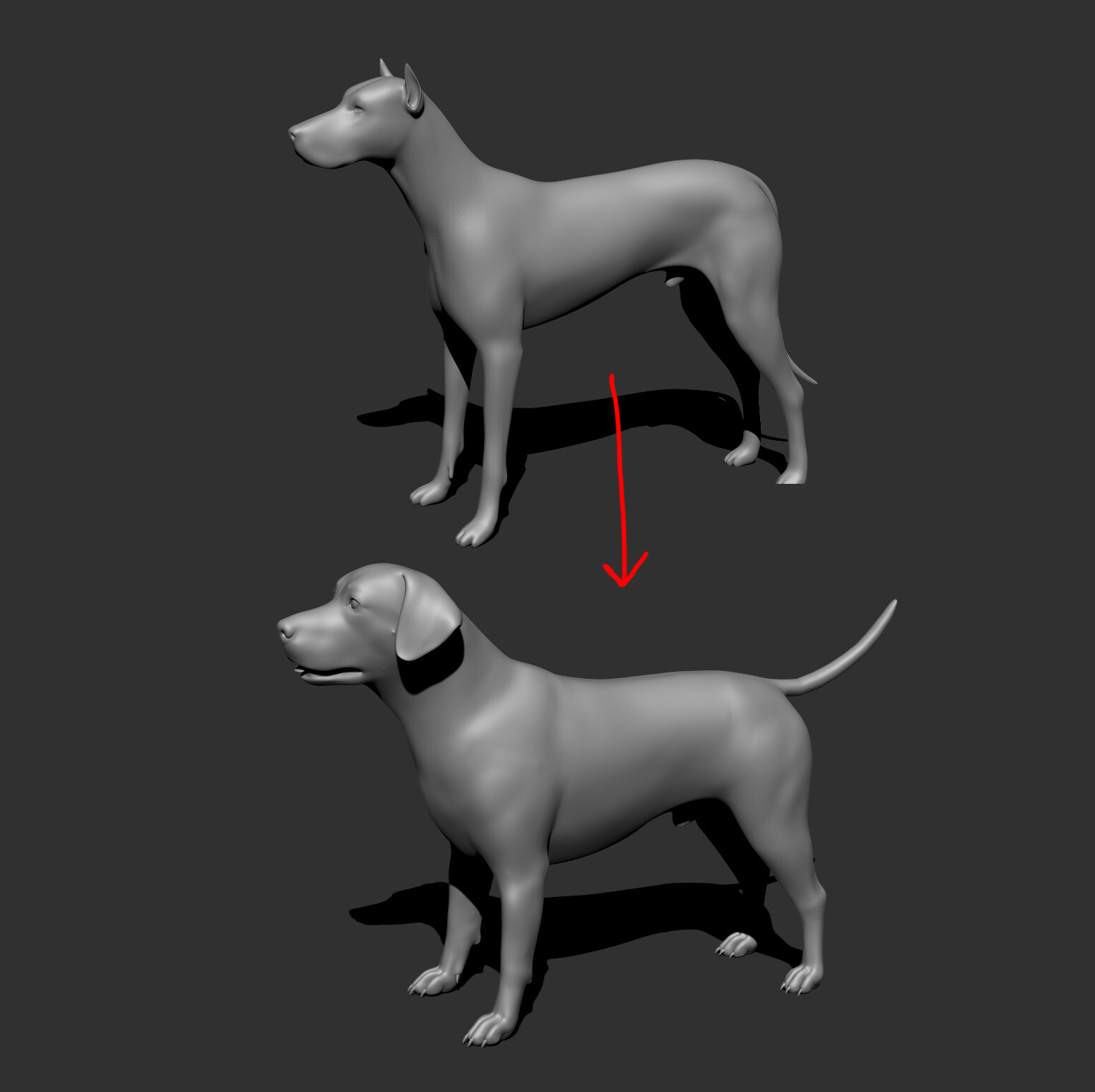 Zbrush sculpt from standard dog project