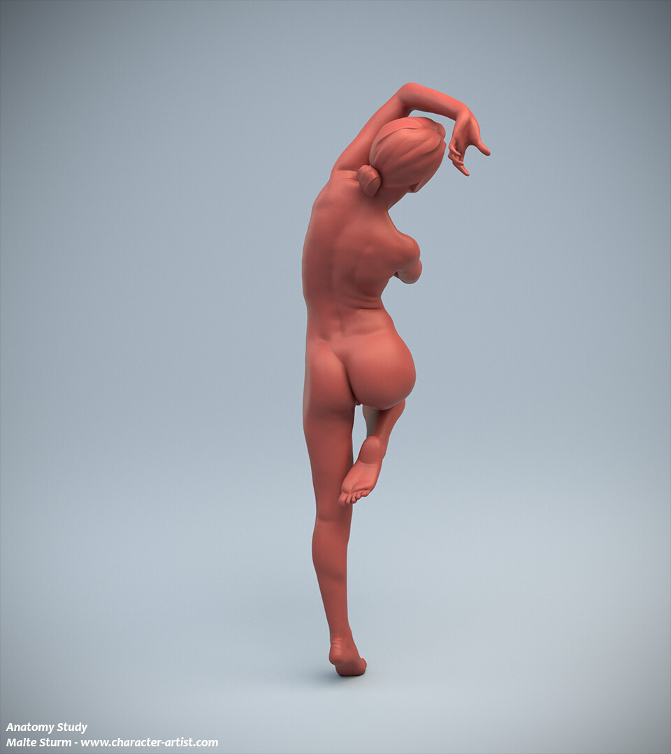 Malte sturm 04 female anatomy