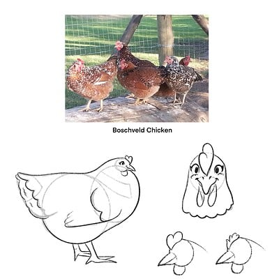 Sydney dennis chicken concept sketches