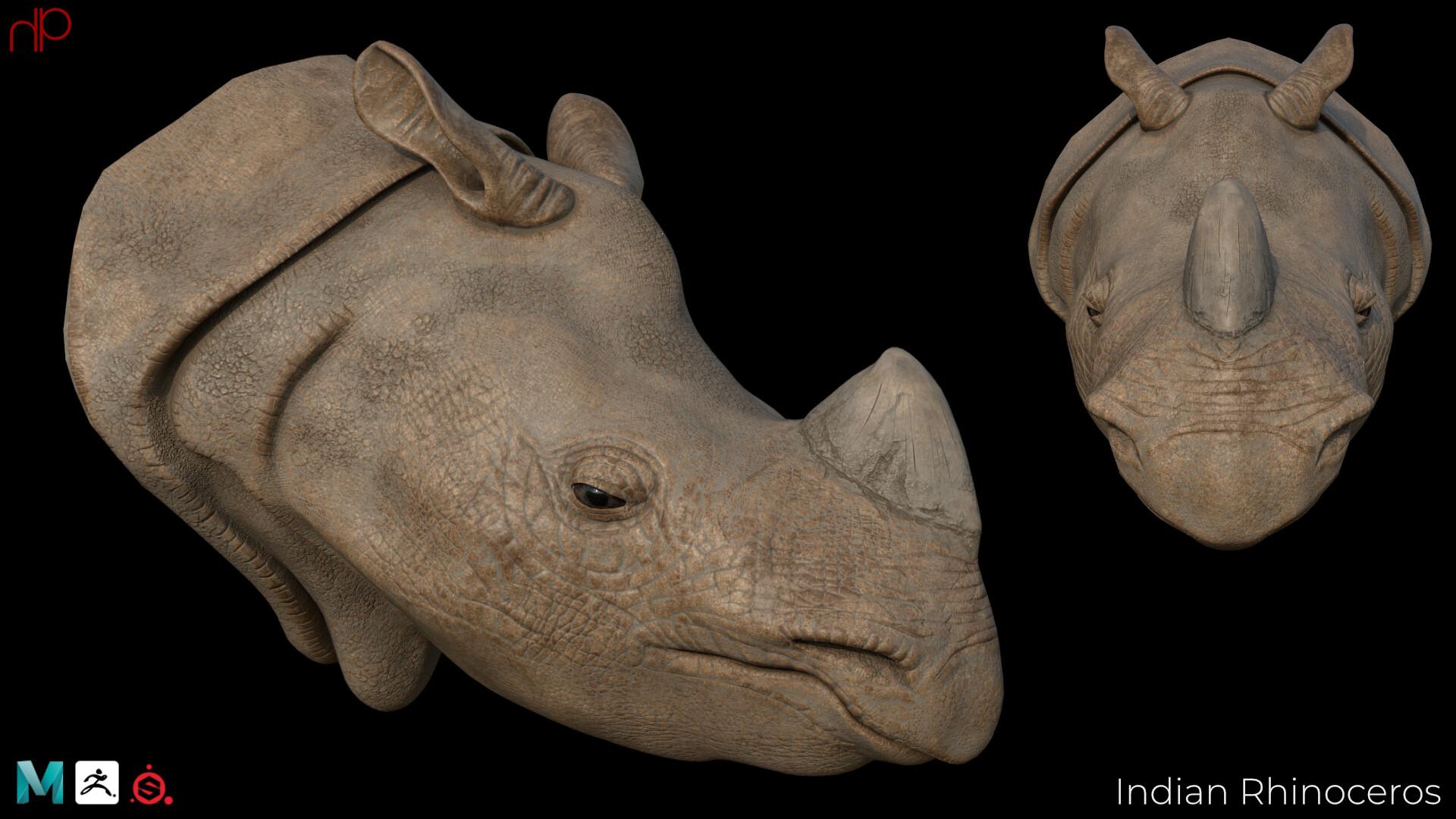 Hans palacios hanspalacios rhino 01